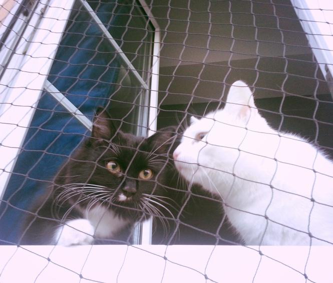 Katzen, süß, heim