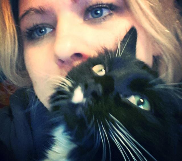 Katze, Selfie, lustig