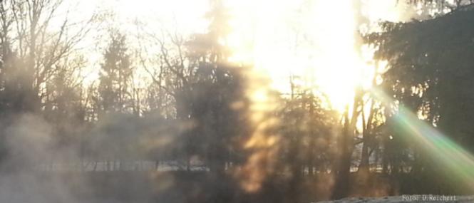 Sonnenaufgang, Natur, Wald
