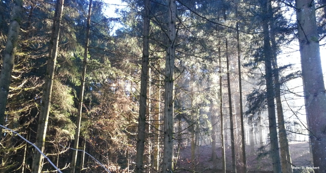 Waldlichtung, Sonne, Winter, Stimmung