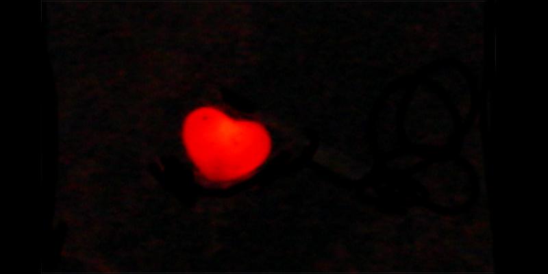 Lampion, Herz, Leuchten, schwarz, Wien