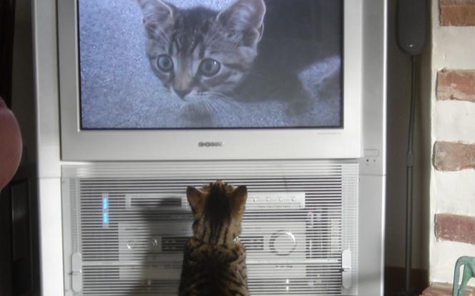TV-Serien, Katze, Fernsehen