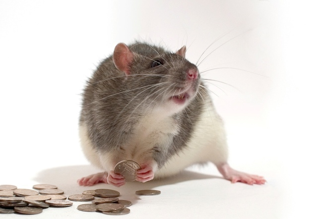 Alexey Krasavin, Flickr, Rat, Money, Russia,