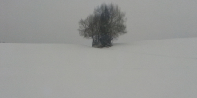Lonely, snow, alone, tree, hill