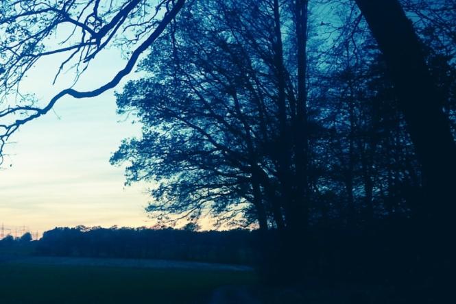 Twilight, darkness, trees