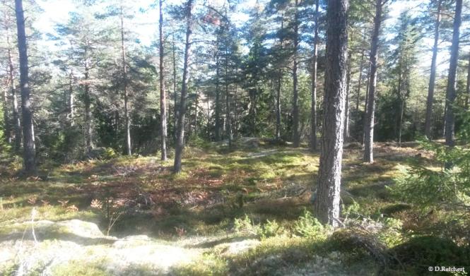 Gnesta, Schweden, Wald, Natur