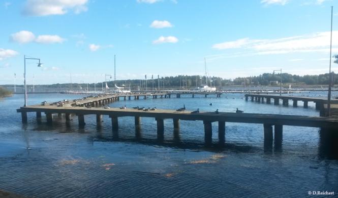 Hafen, Nyköping, Schweden, Wildgänse,