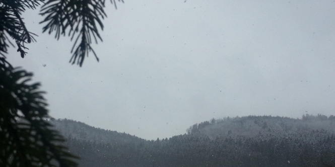 Snow, winter, tree,